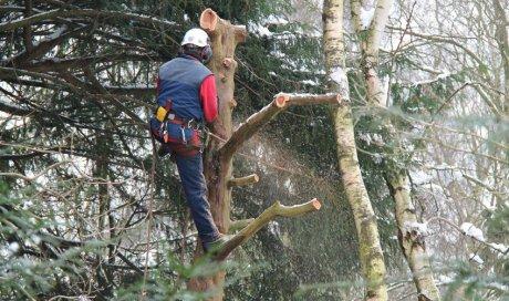 Élagage d'arbres
