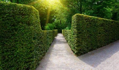 Pose et installation de clôture naturelle